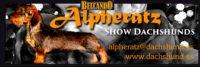 Alpheratz Show Dachshunds